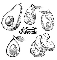 set of avocado on white background design vector image