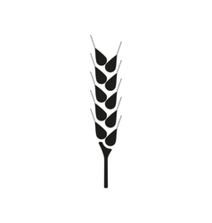 The wheat icon spica symbol flat vector