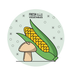Colorful poster of fresh vegetables with cob corn vector