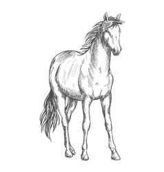 Satnding white horse sketch portrait vector