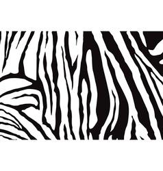 Zebra Stripes Pattern vector image