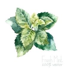 Watercolor mint vector