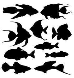 Set of black silhouettes of fish vector image