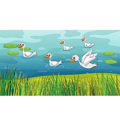 Ducks looking for foods vector