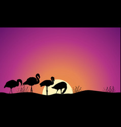 Collection stock of flamingo scene silhouettes vector