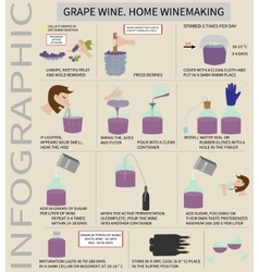 Home winemaking wine from grapes infographics vector