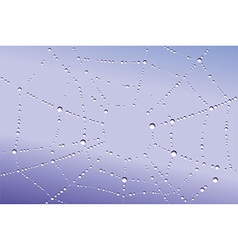Web with droplets vector