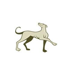 Greyhound dog marching looking up cartoon vector