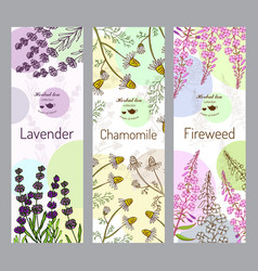 herbal tea collection fireweed lavender vector image vector image