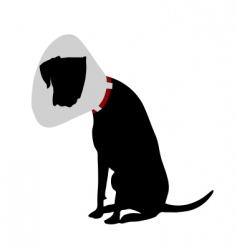 dog with ruff vector image vector image
