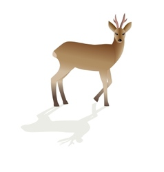 Roe deer image isolated vector