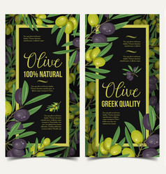 vertical posters with olive berries and leaves vector image