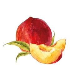 Watercolor tasty peach vector image