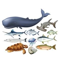 Aquatic animals on white vector image