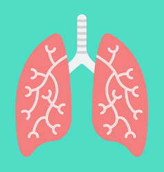 lungs flat icon medicine and healthcare vector image
