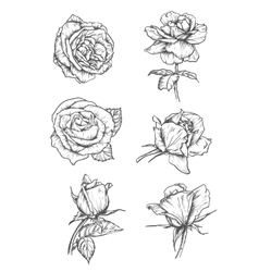 Rose buds icons Flower sketch emblems vector image