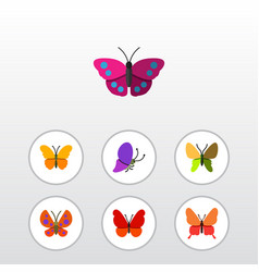 Flat moth set of archippus butterfly monarch and vector