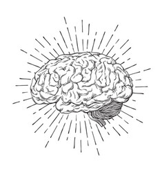 hand drawn human brain with sunburst vector image vector image