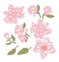 hand drawn spring magnolia flowers and leaves vector image