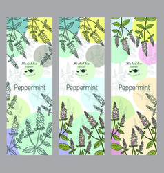 Herbal tea collection peppermint banner set vector