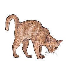 Drawing of threaten cat vector