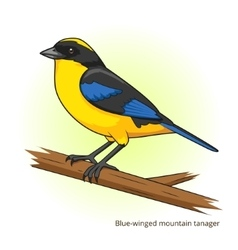 Blue winged mountain tanager bird vector