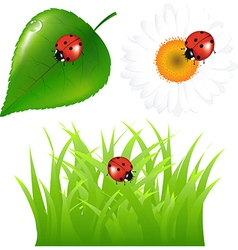 Green Set With Ladybug vector image vector image