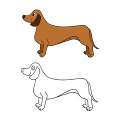 Cute cartoon dachshund isolated on white vector
