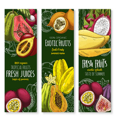 banners of tropical exotic fruit juice vector image