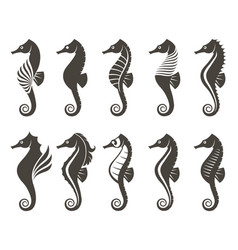 Set of seahorse vector