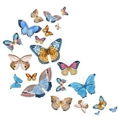 Watercolor butterflies vector image