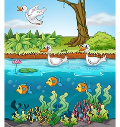 Swans and fishes vector image
