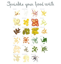 Set of 23 spices and nuts vector image vector image