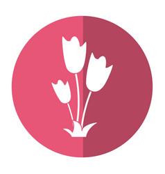 Women day tulip bunch flower shadow vector