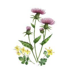 Watercolor bouquet with meadow plants vector