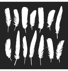 Feathers silhouettes set vector
