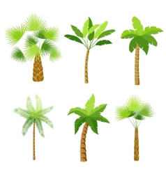 Decorative palm trees icons set vector image
