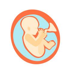 Pregnancy fetal growth stage development vector