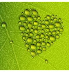 heart droplets leaf vector image