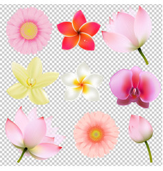 flowers collection in transparent background vector image