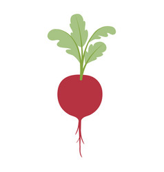 White background of realistic beet with stem and vector