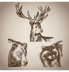 hand draw animals forest vintage vector image