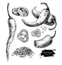 Chili pepper hand drawn vector