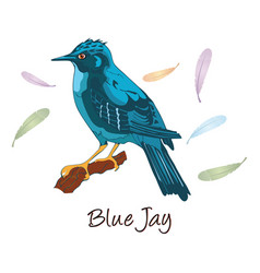 Blue jay color vector