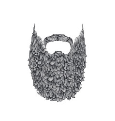 long beard vector image