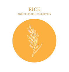 Rice plant hand drawn agricultural crops vector