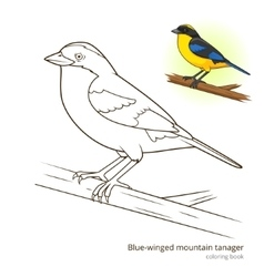 Blue winged mountain tanager color book vector