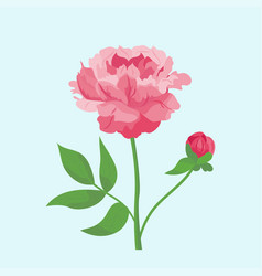 Vintage pink peony flower can be used as greeting vector