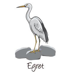 Egret color vector