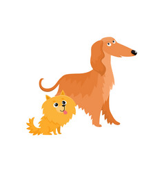 cute funny dog characters - afghan hound and vector image